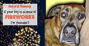 Natural Remedy If Your Dog Is Scared Of Fireworks Or ...