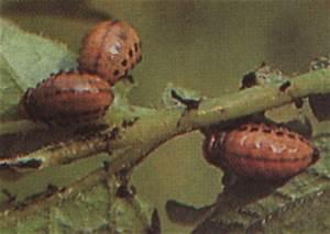 Comment Se Débarrasser Des Pucerons : comment se d barrasser des insectes ~ Dallasstarsshop.com Idées de Décoration