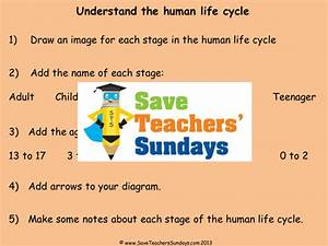 Y2 Explanation Text - Life Cycles By Sham36