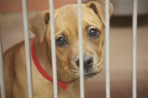chicago animal care  control  dogs   chance