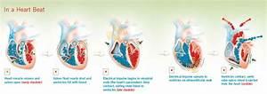 U0026quot In A Heart Beat U0026quot  Diagram