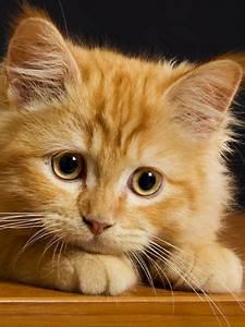 Geheimnisvolle Welt der Katzen