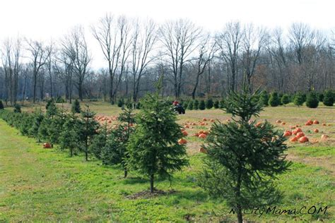 christmas tree hunting at hidden pond tree farm nj girl