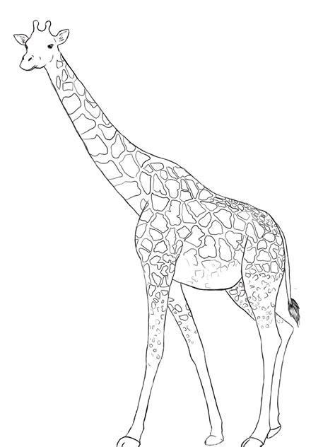 giraffe drawing  getdrawings