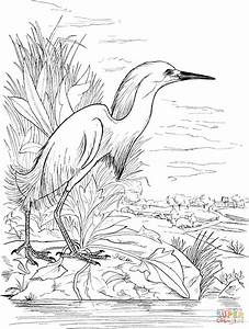 Snowy Egret on the Lake coloring page | Free Printable ...