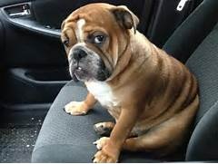 These Adorably Dramati...Sad Puppy
