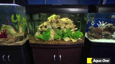 talking fish  types  aquarium choices aqua