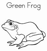 Frog Coloring Pages Green Verde Rana Print Cycle Cute Frogs Tree Noodle Printable Para Colorear Twisty Eye Clipartmag Eyed Popular sketch template