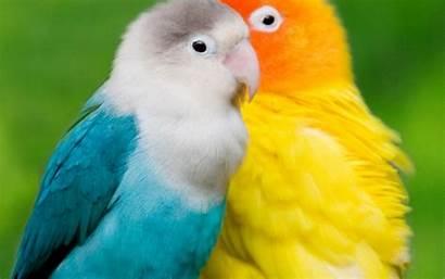 Birds Animal Wallpapers Background Backgrounds 4k Animals
