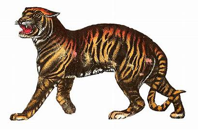 Circus Tiger Animal Animals Lion Clip Leopard