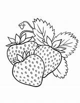 Coloring Strawberry Pages Sheet Printable Button Prints Standard Below Pdf sketch template