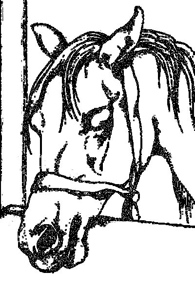 horses coloring page  sad horses face coloring pages