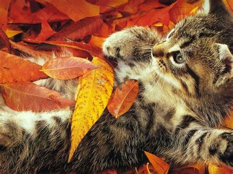 Fall Wallpaper With Animals - fall with animal desktop background wallpapers 4085