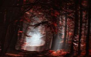 Landscape  Nature  Atmosphere  Forest  Mist  Sun Rays  Path  Trees  Fall  Sunlight  Leaves  Red