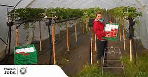 Práce na farmě s ubytováním