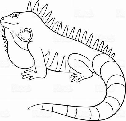 Iguana Coloring Iguanas Smiles Galapagos Preschool Colorear