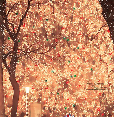 bright christmas light decorations pictures photos and