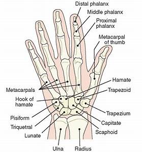 Image Gallery Numbering Phalanges