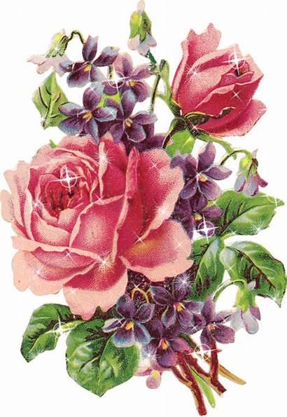 Flores Naturaleza Animadas Imagenes Solo Flowers Como