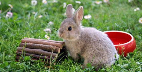 sind kaninchen nicht suess campogeno