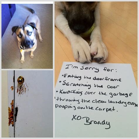 timeout broady wrote   apology letter