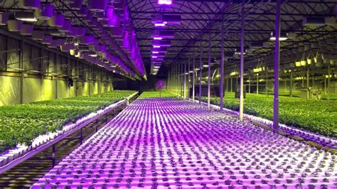 hydroponic gardening supplies masshydro hydroponics grow
