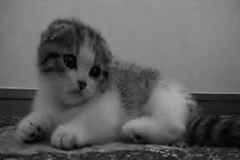 Cat Nodding Gif