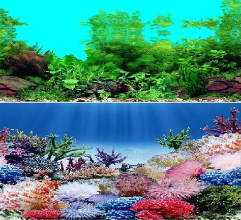 double sided aquarium background backdrop fish tank