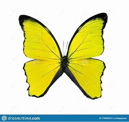 Butterflies Yellow Butterfly Exotic Insects Beetles Spiders