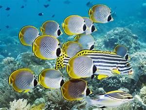 Hd, Wallpaper, Underwater, Swim, Ocean, Coral, Fish