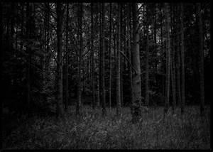 Dark Forest | René Timmermans Photography  Dark