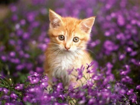 meilleur photo du chat mignon c est a vous de d 233 cider