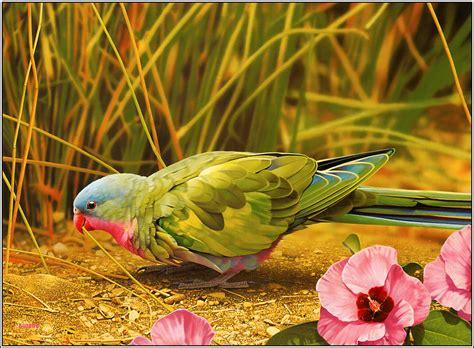 bird photography hd wallpapers