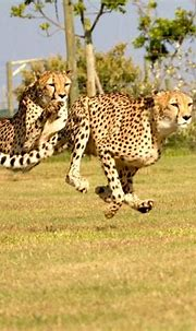 Did You Know?   Jukani Wildlife Sanctuary, Plettenberg Bay ...
