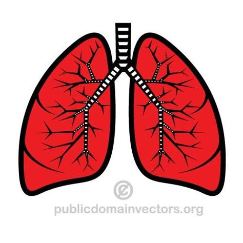Lungs Clipart Organs Clipart Lung Pencil And In Color Organs Clipart Lung