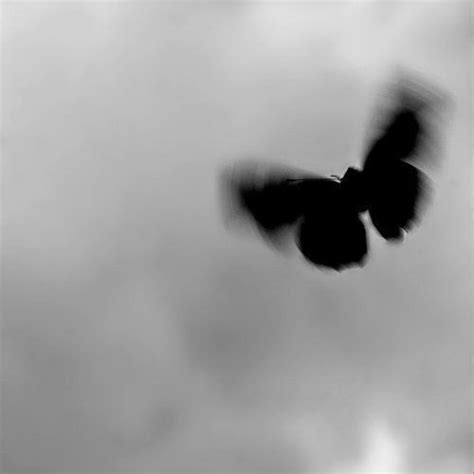 the of a butterfly is one of the shortest it must be