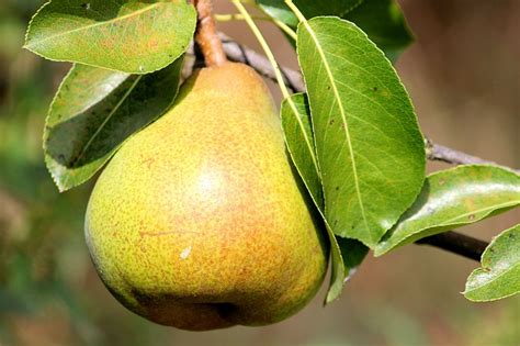 28 Hardy Fruits You Can Grow in Zone 2 and 3