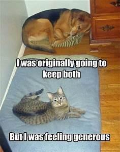 30 Funny animal captions - part 5 (30 pics)   Amazing ...