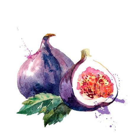 when are figs in season in season figs contentment health magazine contentment health magazine