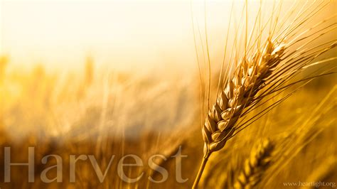 harvest powerpoint background  matthew   box
