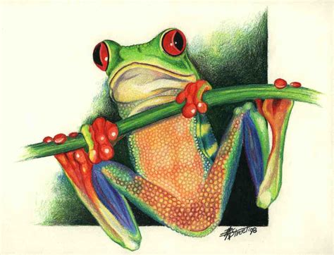 Red Eyed Tree Frog Drawing Gallery