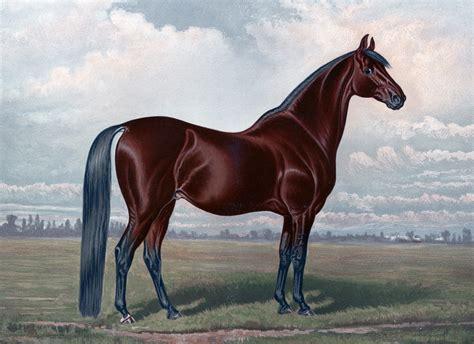 Vintage Animal Wallpaper - equine animals vintage painting brown wallpapers hd