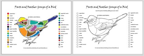 wildlife coloring pages  kids