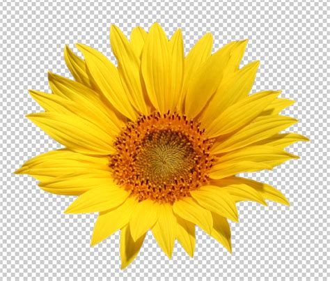 Sun And Moon Background Sunflower Flower 2