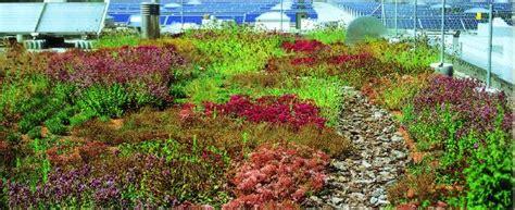 Dachbegruenung Pflanzen Fuer Die Extensivbegruenung by Bew 228 Sserte Extensivbegr 252 Nung Ist Effizient Zinco Gmbh