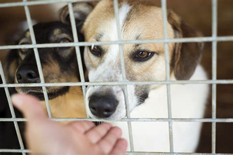 local animal shelters rescue agencies part  national
