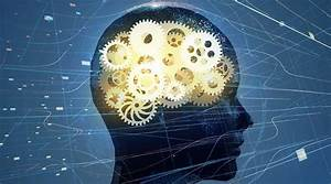 Brain Wiring Changes When Mastering New Skills  Says New