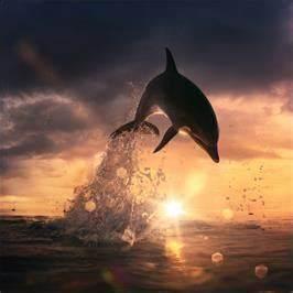 Schöne Delfin Bilder : yunus bal gergi tavan renolit ~ Frokenaadalensverden.com Haus und Dekorationen