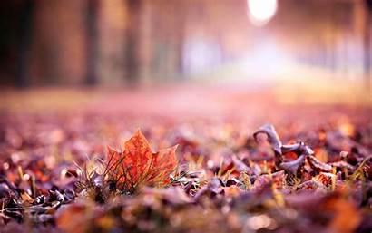 Leaves Autumn Close Background Leaf Fall Blur