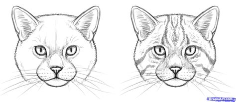 draw wild cats step  art reference material